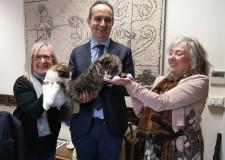 Ravenna. Torna l'esposizione felina. Le fotografie dei gatti realizzate dall'olandese Nynke Van Holten.