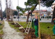 Bellaria Igea Marina. Oltre duecento nuove piante per il parco del Gelso. Trattasi di frassini, gelsi e tamerici.