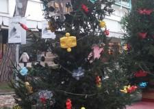Cesena. L'oasi di Babbo Natale. Un luogo dove ripiantare gli abeti natalizi dismessi  dopo le festività.