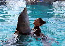 Cattolica. La ragazza che ama e cura i delfini del delfinario Oltremare  ospite di Amadeus su Rai Uno.