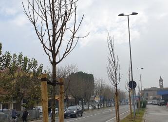 Rimini. Prosegue la piantumazione di verde. Lungo via Duca degli Abruzzi, via Flaminia e via Sinistra del porto.