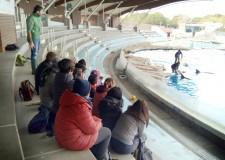 Riccione. Una giornata a Oltremare. Per gli istruttori cinofili di 'Alfadog Training Academy'.