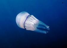 Forlì. Omaggio a Rodari: 'Pesce grande, pesce piccolo'. Medusa, polpo, granchio e lumachina insieme.