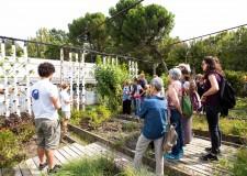 Rimini. Produzione agricola 'in acquaponica'. Si candida un progetto al programma europeo 2020 Life.