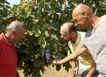 Faenza. Cambia la vendemmia con SOS QualiTec. Garantite l'idoneità delle uve e la materia prima.