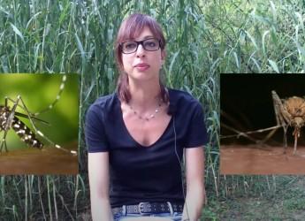 Bassa Romagna. Zanzare in pillole: tre video su come comportarsi e proteggersi. Iniziativa del Ceas.