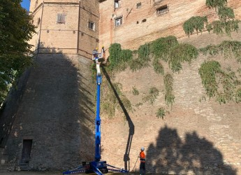 Santarcangelo d/R. Sferisterio: pulizia del muro dalle piante spontanee. Con trattamento a base di aceto.