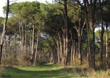 Ravenna. A ' Le vie di Dante' il Best in Travel. Il prestigioso  premio per la  sostenibilità di Lonely Planet.