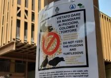 Faenza. Multe a chi fornisce da mangiare ai piccioni, sanzionati tre faentini. Per evitare danni e disagi.