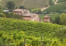 Emilia Romagna. Oltre 5,7 mln di euro per promuovere i nostri vini. A due progetti  il finanziamento OCM.