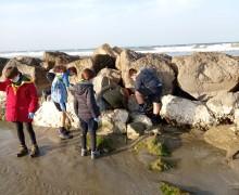 Misano Adriatico. Una spiaggia più pulita grazie ai 'Lupetti' del gruppo Scout. Piccoli grandi gesti.