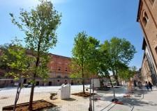 Rimini. Piazza Malatesta, posati i cinque nuovi platani lungo il lato di  Santa Colomba.