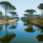 pineta di Ravenna ( repertorio)